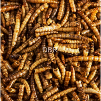 Natural Dried Shrimp, Fish, Mealworms, Ulat Roti  for Sugar Glider, Hamster Arowana Fish Reptiles Turtle Bird Lizard
